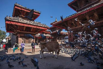Kathmandu, Durbar Square, November 2012