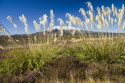 Only in New Zealand - a totally bizarre mix of moorland heather, pampas grass, snow and a volcano!