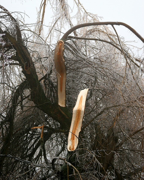 Large tree that broke from the weight of the ice as I was getting out of the car.