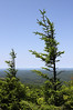 Wind-swept trees at the top of Spruce Knob, West Virginia