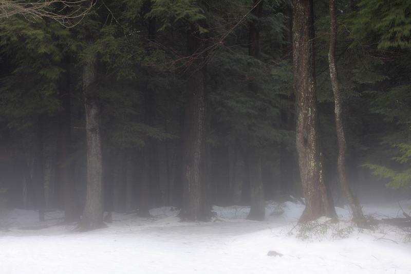 Foggy morning at Muddy Creek Falls