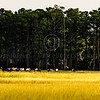 Assateague_064