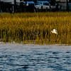 Assateague_169