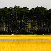 Assateague_050