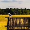 Fowl Rest Area Chincoteague