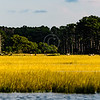 Assateague_040