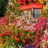 Loughborough in Bloom