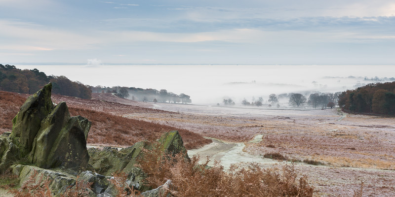 Frost and Mist at Bradgate Park