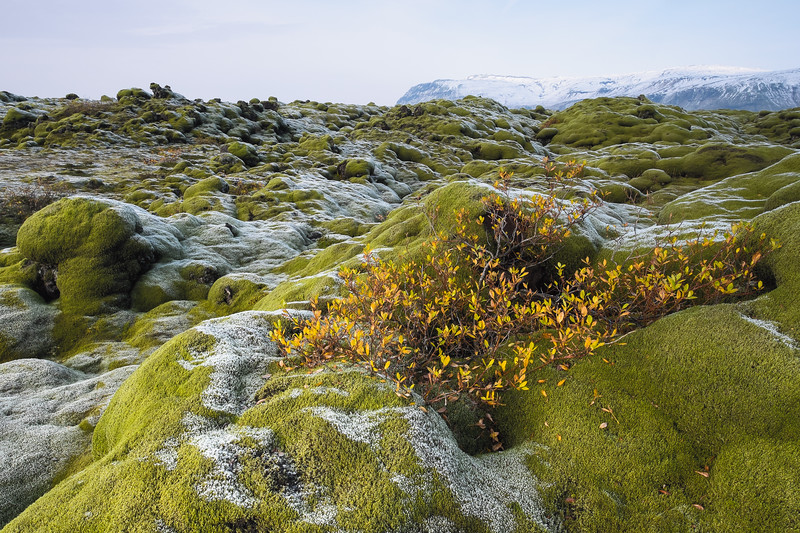 Moss Covered Pillow Lavas