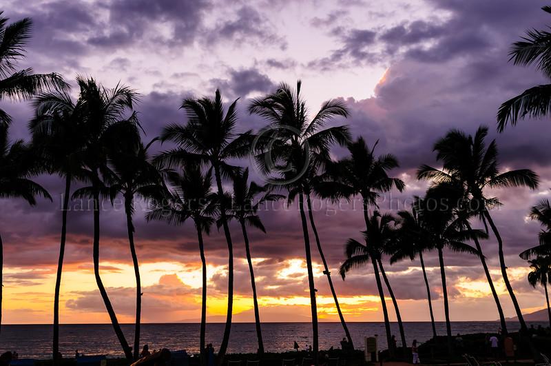 Hawaii2014_555