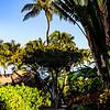 Hawaii2014_1380