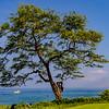 Hawaii_100