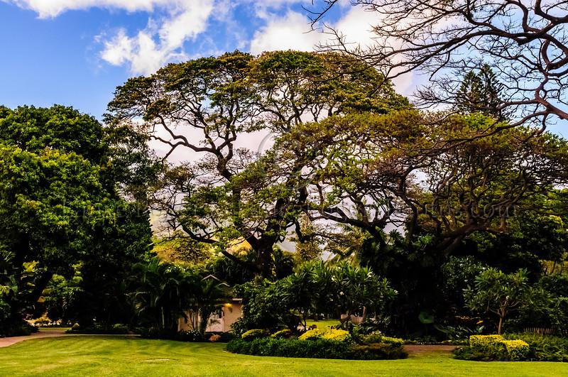 Hawaii2014_608