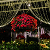 Christmas_156