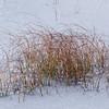 Reeds on Rannoch Moor