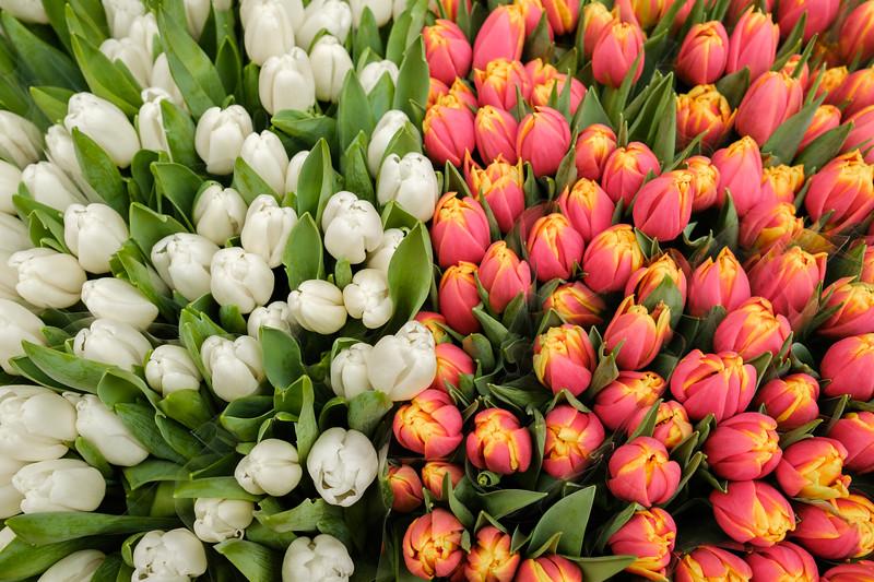 Tulips in the Rialto Market