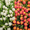 Tulips in the Rialto Market