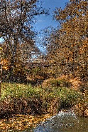 Fall Color in Willow Park, Texas - It happens each year on this day from about 11 until 2.  Bring your lunch!