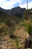 McKittrick Canyon - Guadalupe Mountains National Park, Texas