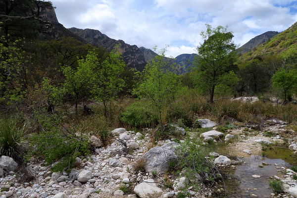 Along the trail in the bottom of McKittrick Canyon...finally!