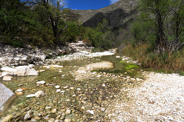 Bottom of McKittrick Canyon - Guadalupe Mountains National Park, Texas