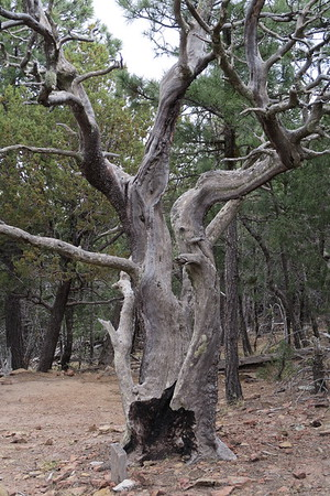 Creepy-looking tree