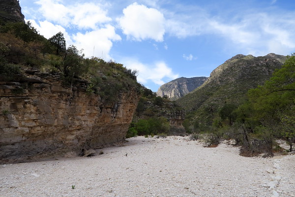 Stream bed in the bottom of McKittrick Canyon.