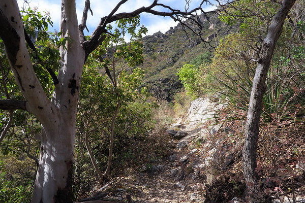 Rough trail - McKittrick Canyon - Guadalupe Mountains National Park, Texas