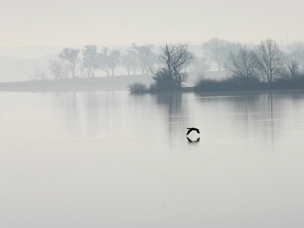 Wings in the Mist