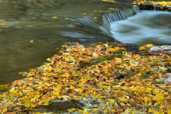 Clear Fork of the Trinity River - Tarrant County, Texas
