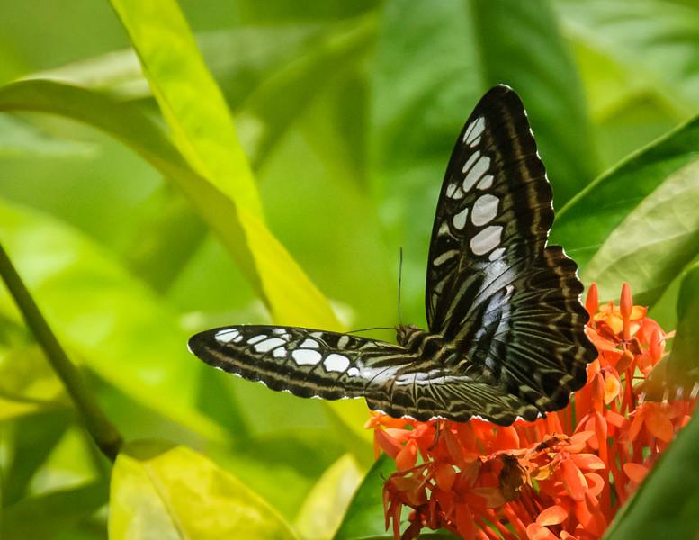 A Butterfly Enjoys the Lodge Garden