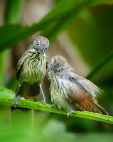 A Little Bird Grooming Behaviour