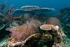 Healthy Corol Reef