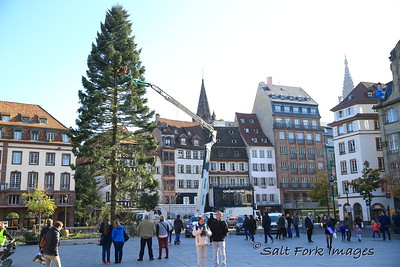 Getting ready to trim the Christmas Tree in Strasbourg