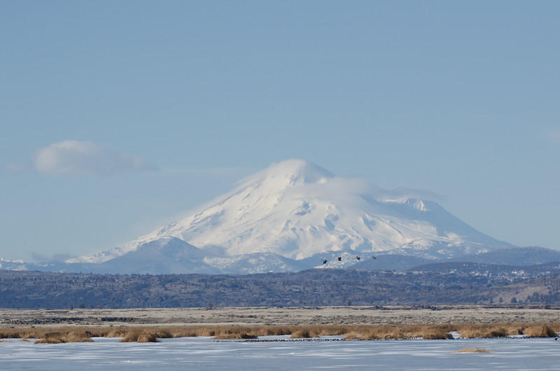 Mount Shasta and geese