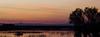 Great flocks move at dusk