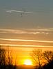 Last flocks of sunset