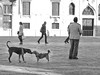 Two dogs play in one of the dozens of campos (plazas) in Venice.