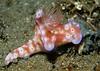 Colorful Nudibranch