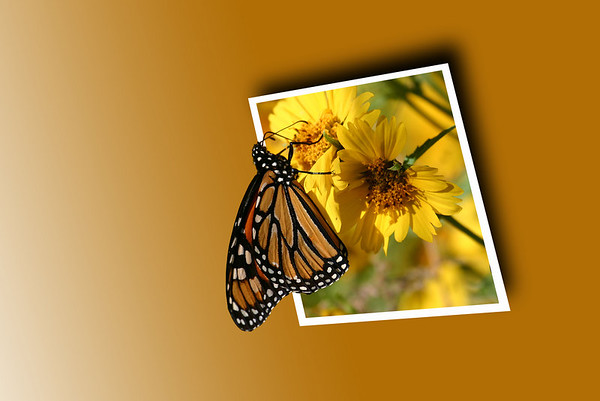 Butterfly OOB