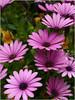 Purple Flower 73