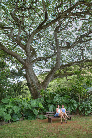 Jill and Martha found a nice place to sit under a Monkey Pod tree.  Probably the coolest tree I've ever seen.
