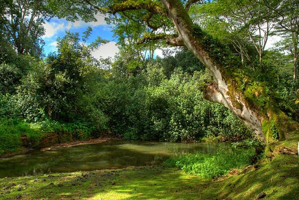 Enjoying a picnic in the rainforest after a fun innertube ride down a sugar plantation irrigation canal.