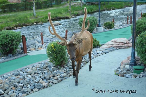 Estes Park, Colorado, where the elk enjoy a good round of mini-golf.