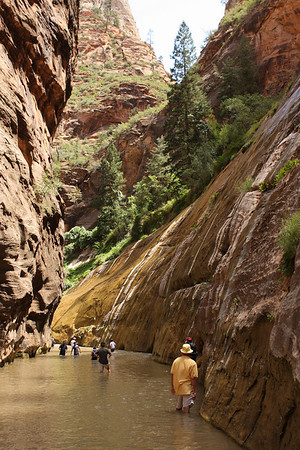 Welcome to the Narrows.  It was a little too deep for us to continue the hike.  Eventually, the river narrows to a slot canyon just a few feet wide with sheer cliffs rising hundreds of feet on either side.  The Narrows extends about 16 miles from the trailhead at the top of Zion Canyon.