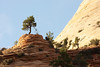 The east end of Zion National Park features petrified sand dunes and trees in odd locations.
