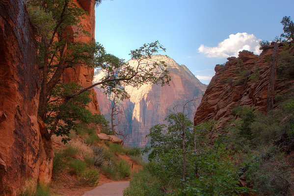 This is my favorite shot from Refrigerator Canyon on the trail to Angel's Landing in Zion National Park.  July 29, 2009.
