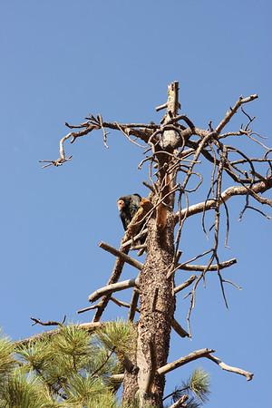 Check out the California Condor.