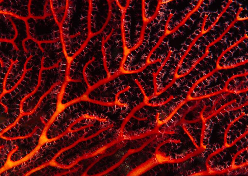coral polyps at night