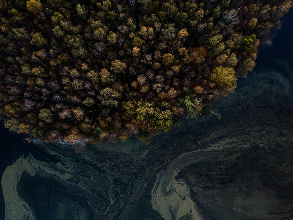 Island of the Birds